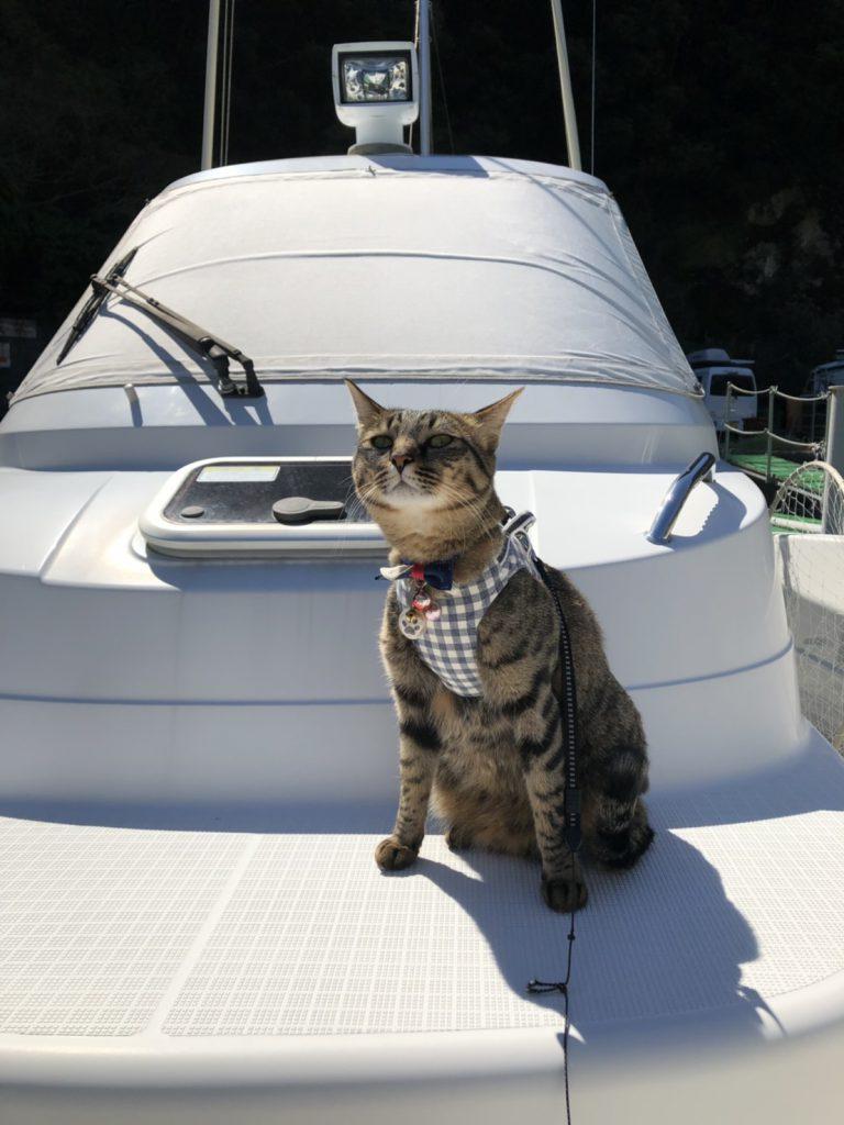 海の猫 かっこよくキメポーズ! ハイチ~ズ